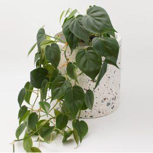 Serax Blumentopf aus Terrazzo, weiß, klein